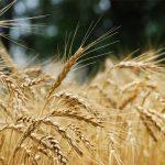 Seguros de granizo de cosecha